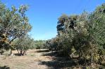 AUPS, beau terrain arboré proche village d'environ 3089 m2. 2/4