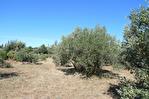 AUPS, beau terrain arboré proche village d'environ 3089 m2. 3/4