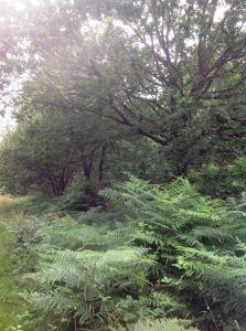 Bois Foret Domaine forestier Saint Guyomard