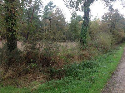 Bois de 10640 m2 a Pluherlin!