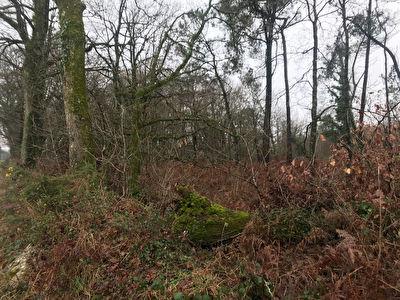 Terrain boise Pluherlin 6 430 m2