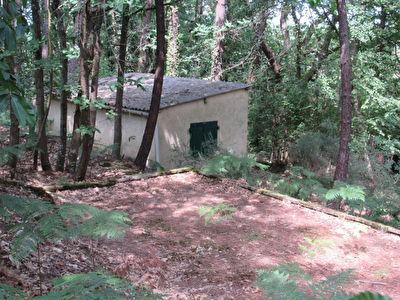Domaine forestier - Terrain Loisirs proche Cerans-Foulletourte