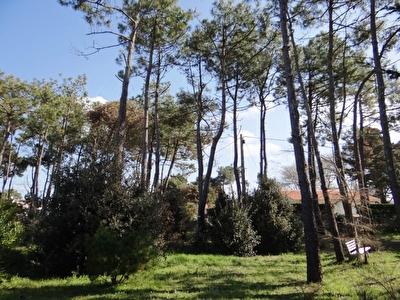 Terrain Bretignolles Sur Mer  - 500 m2