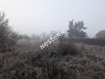 54113 BLENOD LES TOUL - Terrain 3