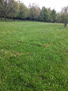 Terrain viabilise 1800 m2 Cordes Tolosannes