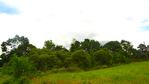 Ensemble immobilier 42 hectares - Saint Christophe Du Ligneron 6/9