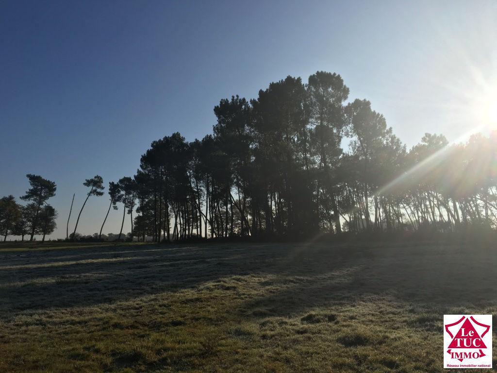 Domaine forestier Saint Savin