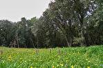 Villa de 300 m² sur 5 000 m² de terrain - Villeneuve-lès-Avignon 10/11